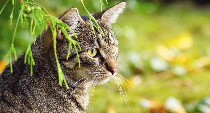 Kaffeesatz effektiv gegen Katzen & Schnecken einsetzen